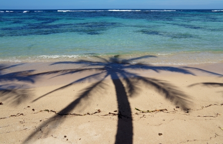 Coconut palm tree shade on a sandy beach with clear waters of a lagoon in background Stock Photo - 18764882