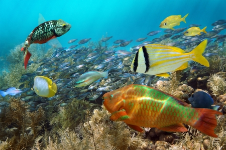 Scuba diving in a coral reef with shoal of colorful fish
