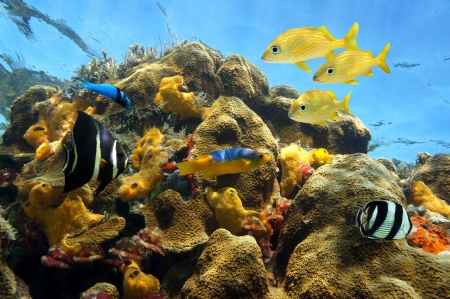 jamaica: Thriving sea life in a coral reef with colorful fishes, tube worms, sponges and the water surface in background Stock Photo