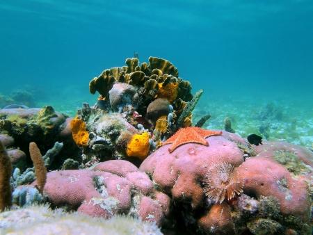hardcoral: Photo of a colorful coral reef, Caribbean sea, Panama