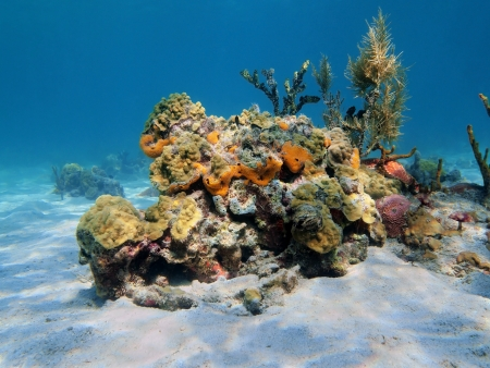 Colorful under water marine life on a sandy seabed photo