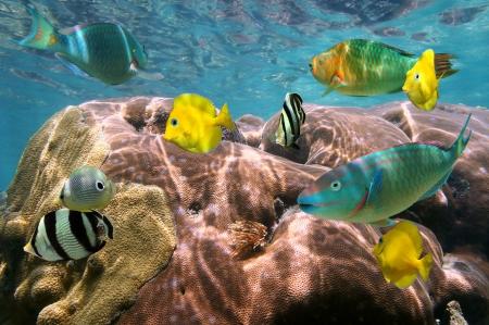 Kleurrijke tropische vissen en koraal met het wateroppervlak in de achtergrond