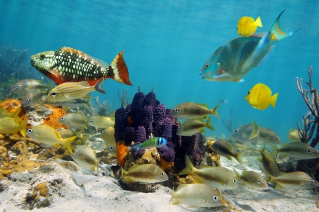 Colorful sea life in a coral reef with tropical fish around tube sponges photo