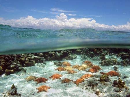 arrecife: Dividir vista con el cielo y las nubes por encima y debajo del agua, muchas estrellas de mar cojín en el suelo marino arenoso