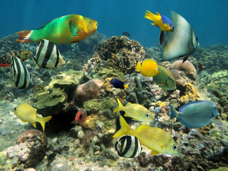 Healthy coral reef with colorful tropical fish, Caribbean sea photo
