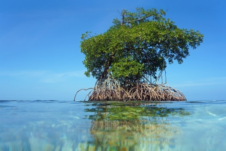 islet: View from water surface, an islet of mangrove with blue sky in background, Bocas del Toro,Caribbean sea