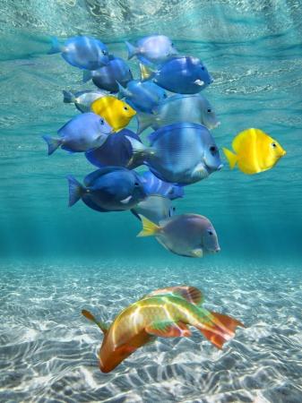 Onderwater zonlicht met school van kleurrijke vissen boven een zandige zeebodem, Caribische zee