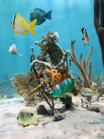 yala: Under water marine life with tropical fish and colorful sea sponges fixed on coral, Caribbean sea