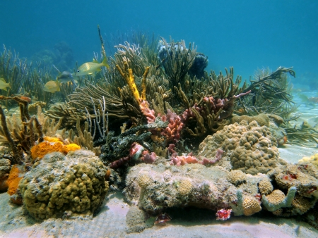 Underwater reef with beautiful colors of sea sponges and corals photo