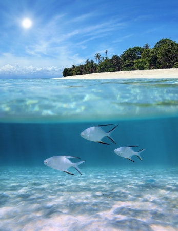 Underwater and surface view with ripples of sunlight on a sandy sea floor and a tropical beach