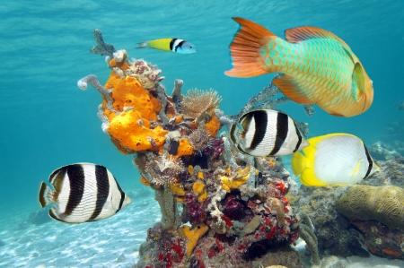 Les couleurs vibrantes de la vie marine dans un récif de corail avec des poissons colorés, des éponges de mer et les vers à tube