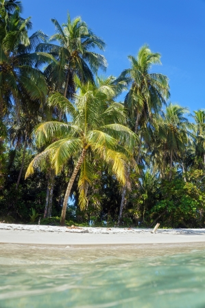 View from the water surface on a tropical sandy beach with coconut trees, Caribbean sea photo