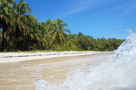 Wave crashing on a sandy beach with beautiful tropical vegetation photo