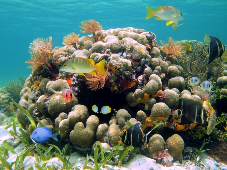 Coral reef with colorful tropical fish and sea worms, Caribbean, Costa Rica photo