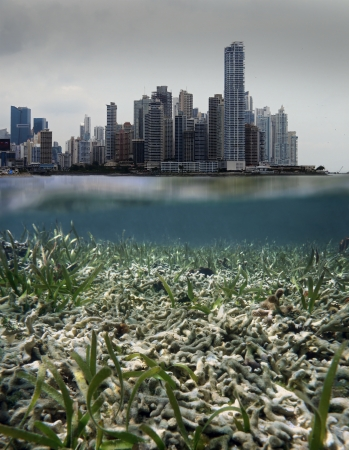 polluted: Scenery with skyscraper in pollution cloud and underwater a coral reef destroyed by coastal development issues