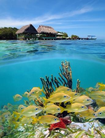 waterline: Surface and underwater view, Bocas del Toro, Panama