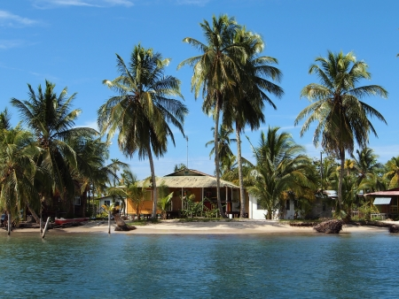 Caribbean beach house under coconut trees photo