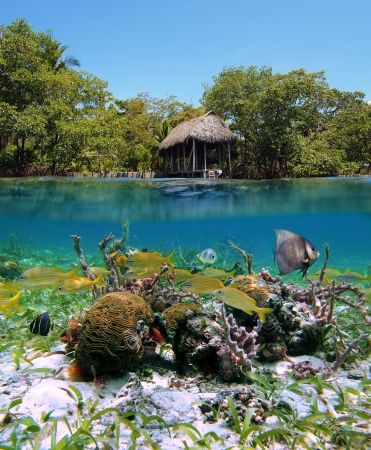 waterline: Surface and underwater view with mangrove, a boathouse, colorful tropical fish and coral, Bocas del Toro