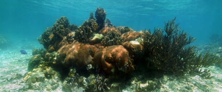 Underwater panorama in a healthy coral reef