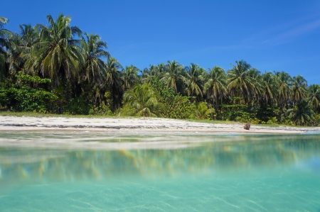 Tropical beach with lush vegetation taken from the water surface, Caribbean sea, Zapatillas islands, Bocas del Toro, Panama Stock Photo