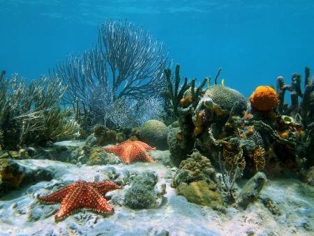 물 아래 불가사리와 아름다운 산호