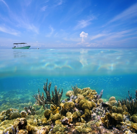 coral ocean: Split view with coral reef ocean floor and blue sky with cloud reflection on water surface Stock Photo