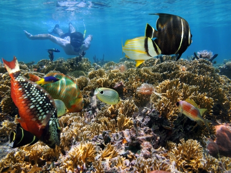 Snorkeling in a coral garden with colorful tropical fish, Caribbean sea photo