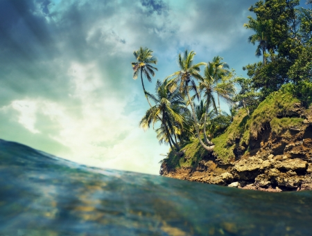 Los �rboles de coco con la luz del sol sobre el mar, el Caribe, Bocas del Toro, Panam� photo