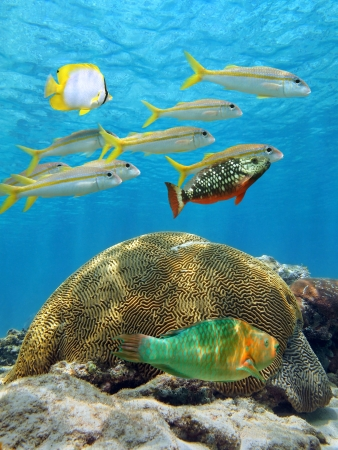 School van tropische vissen boven koraal met het wateroppervlak in de achtergrond, Caribische zee, Aruba