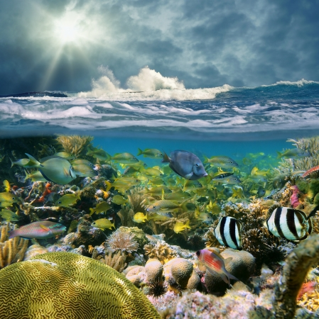 school of fish: Over-under split view with wave crashing onto a reef, and beautiful coral with school of fish