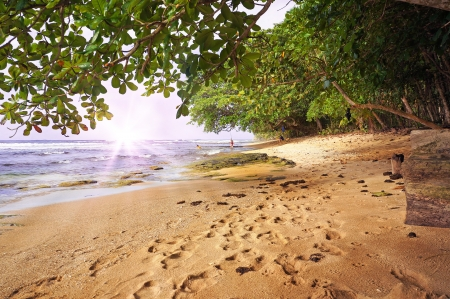 Tropical beach at sunset with lush vegetation, Caribbean, Manzanillo, Costa Rica photo
