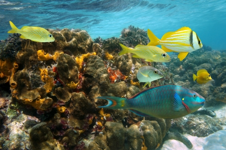 colorful fish: Undersea colors in a coral reef with colorful fish, Caribbean sea, Jamaica Stock Photo