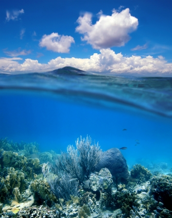 the split: Underwater coral reef with water surface and cloudy blue sky horizon split by waterline
