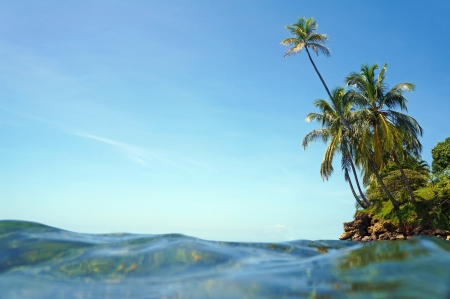 martinique: Water surface and blue sky with coconut trees leaning over the sea Stock Photo