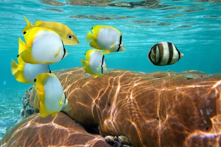 cancun: Colorful tropical fish and coral under water surface, Caribbean sea, Mexico Stock Photo