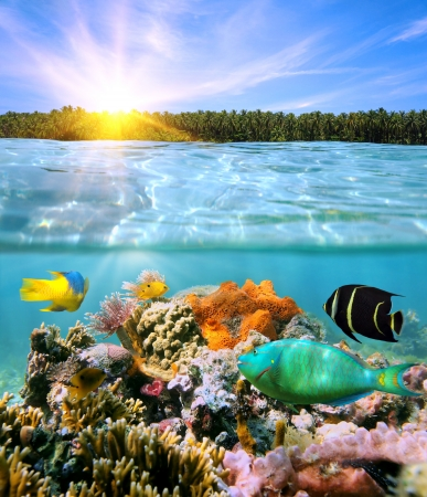 coral reef underwater: Sunset with coconut trees on horizon and underwater colorful marine life split by waterline Stock Photo