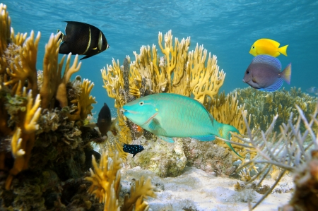 bahama: Undersea scene with colorful tropical fish in a coral reef, Atlantic ocean, Bahamas islands Stock Photo