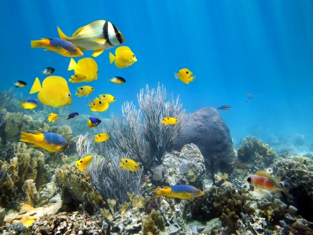 Underwater coral reef scenery with colorful school of fish