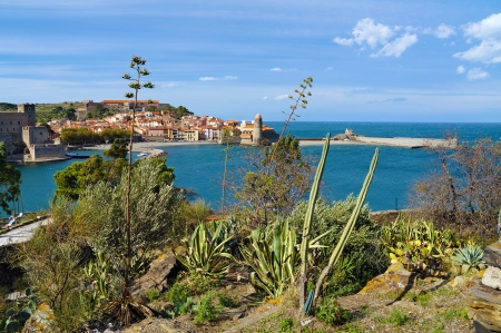 vermilion: Mediterranean vegetation overlooking the sea with beautiful village of Collioure in background, Vermilion coast, Roussillon, Pyrenees Orientales, France