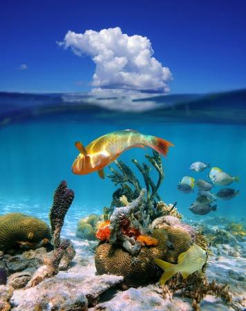 Waterlijn met onderwater kleurrijke tropische mariene leven en boven het oppervlak van de blauwe hemel met een wolk, Caribische zee