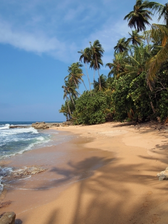 Pristine beach with a shade of coconut tree on the sand photo