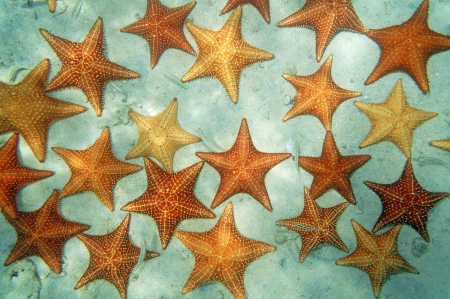 Sandy seabed covered by cushion starfish in the Caribbean sea, natural scene