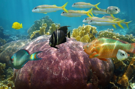 Colorful reef fish undersea with beautiful coral, Caribbean sea photo
