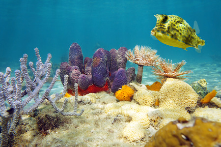 Colorful underwater marine life with a scrawled cowfish photo