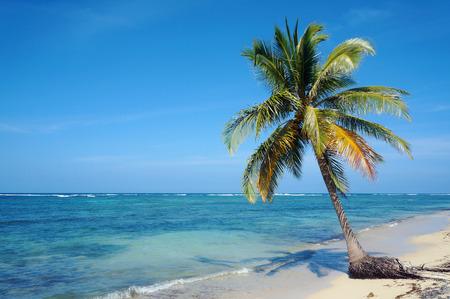 Coconut tree alone on a sandy beach with sea horizon and blue sky, Caribbean, Yucatan, Mexico