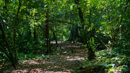 Footpath into the jungle with dense vegetation, Panama, San Cristobal island, Bocas del Toro Stock Photo