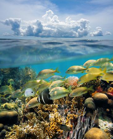 熱帯の水中海底のサンゴ礁と水面、雲、ユカタン、メキシコが付いている空の上の魚の群れのビューを分割します。