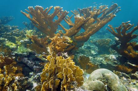 Underwater landscape in a beautiful coral reef, Atlantic ocean, Bahamas islands, Atlantic ocean, Bahamas islands photo