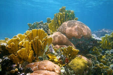 Underwater landscape in a thriving and colorful coral reef of the Caribbean sea photo