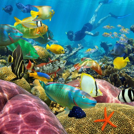 school of fish: Man underwater swims in a colorful coral reef with tropical fish Stock Photo